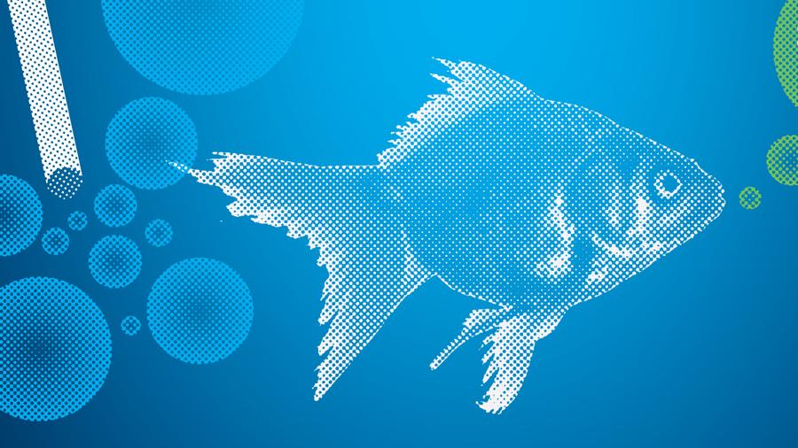 GPEQ-Goldfish-Race_thumb
